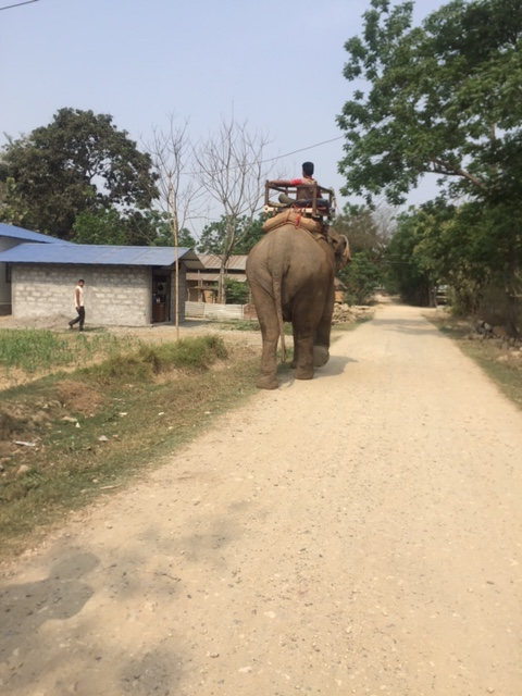 village walk elephant