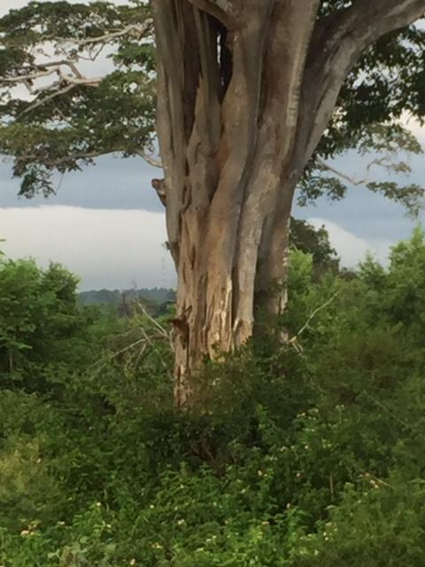 ud monkey